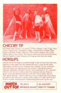 chicory back